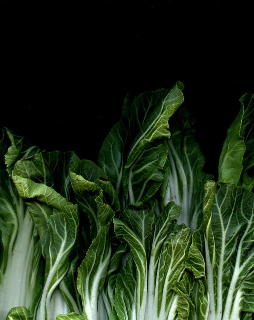 55018 Brassica rapa chinensis by horticultural art, via Flickr
