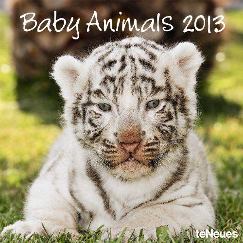 2013 Baby Animals Wall Calendar