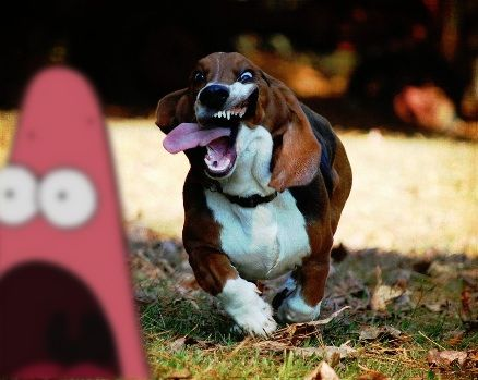 I try for good pics, then end up like this dog. Hahahaha I love Patrick just chillin in the background.