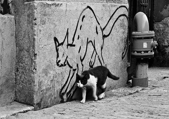 Cat graffiti. #streetart