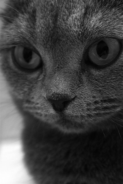 Kitty portrait.