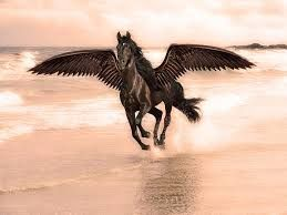 wild animals pictures horses - Google Search