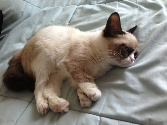 Grumpy Cat Is Sleeping