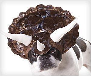 Make your cute #pet #dog a stunner with dinosaur head gear #costume for next party.