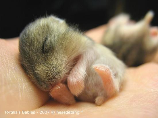 Cute baby hamster :)