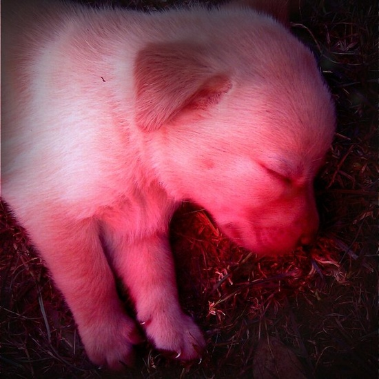 Baby dog!