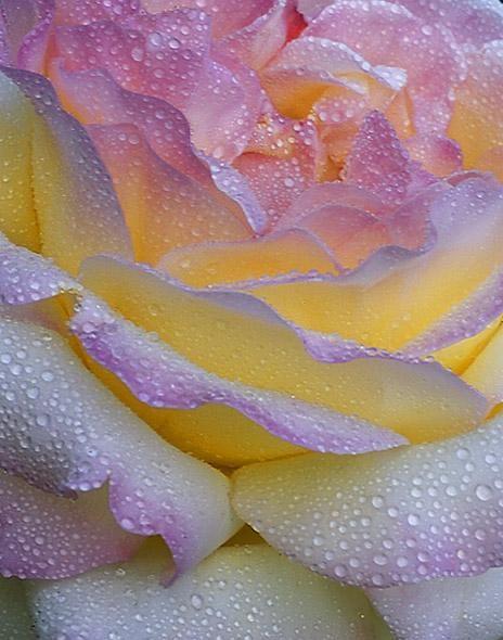 Villa sea rose Lipari