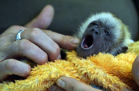 Animal Photos Of The Week: babies say hello