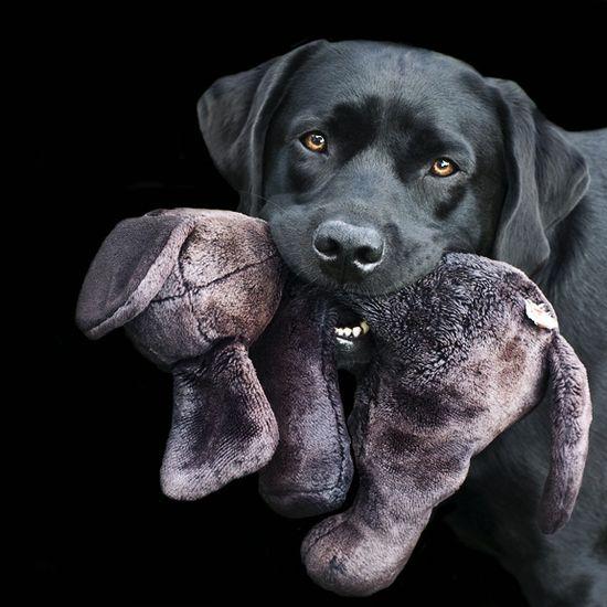 Dog & His Stuffed Animal