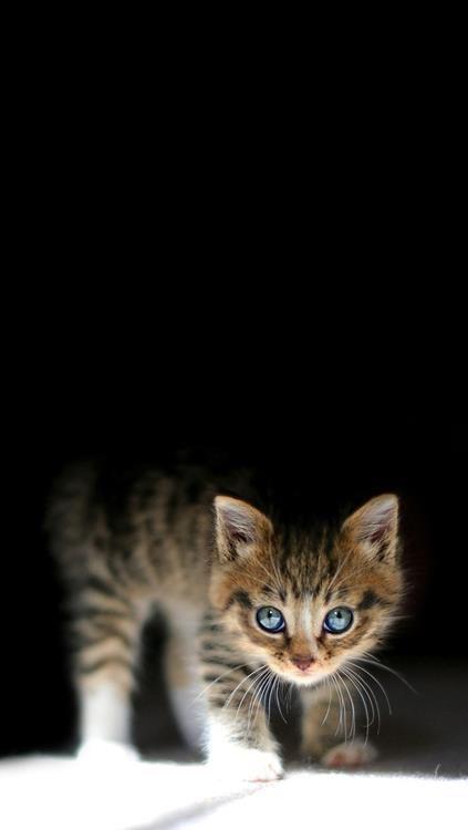 look at those beautiful blue eyes