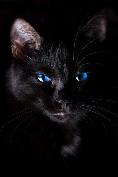 black and blue #budgettravel #travel #animal #cute
