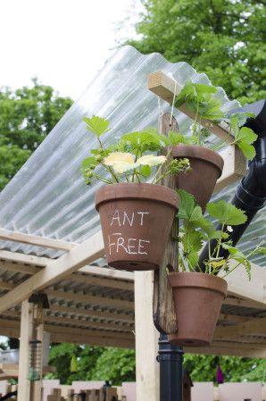 Sustainable Garden Design_14