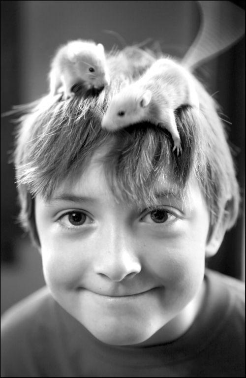 Cute Pet Rats On Little Boy's Head