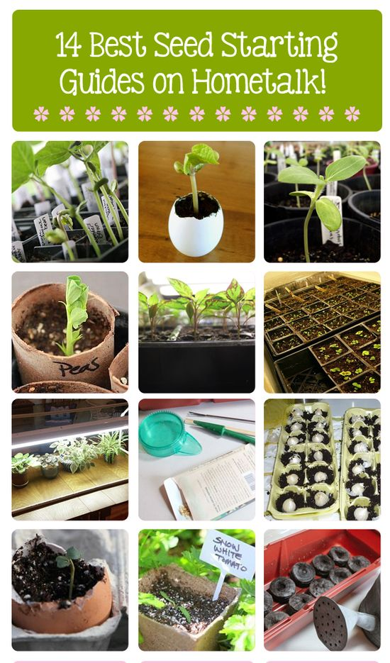 14 best seed starting guides on Hometalk! ---> www.hometalk.com/... featuring @Shirley Bovshow @Sow & Dipity @Stephanie @ Garden Therapy and more!