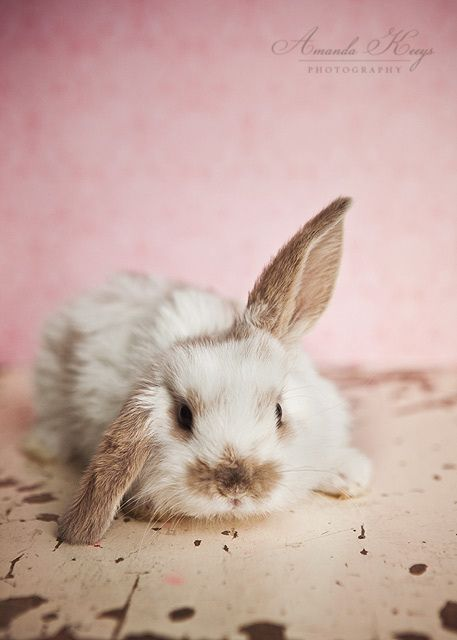 by Amanda Keeys  #awww #cute #bunny #animal# awwwnimals #rabbit #pink #white