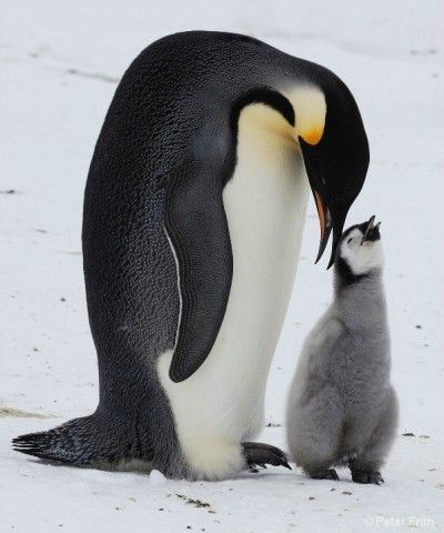 more animal love