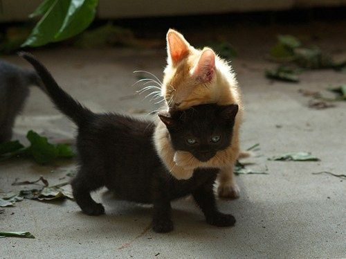 Kitten hugs