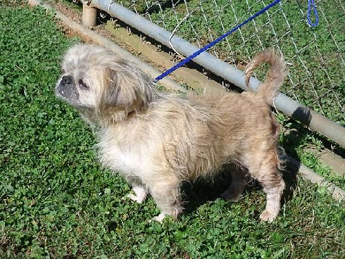 Cute little Blonde nine year old girl that is active and friendly.  Walks well on a leash.  Come and meet Pearl at the Haywood County Animal Shelter by asking for Dog #2118Please come and visit our available pets at the Haywood County Animal Shelter...