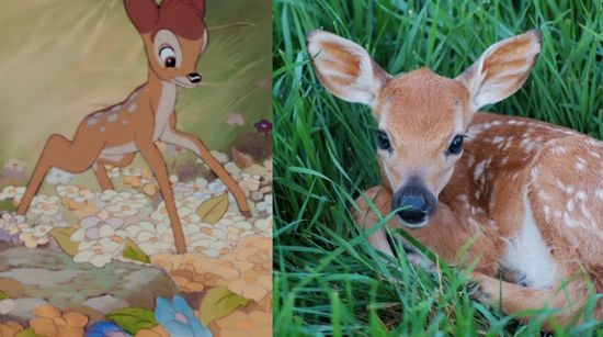 baby animals Disney Bambi baby deer