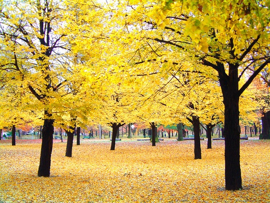Cool Yellow Trees