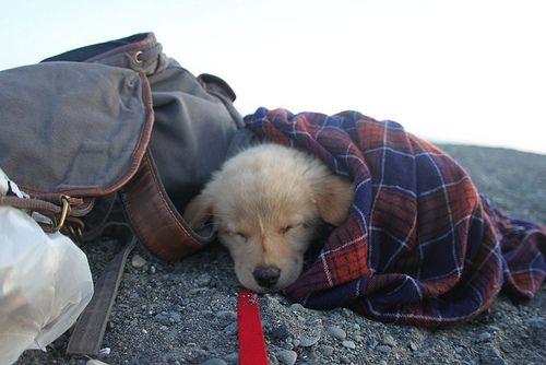 What a cutie ; )