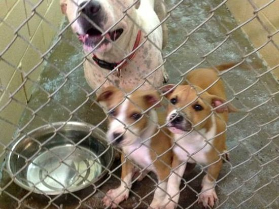 PLEASE HELP SAVE MELLIE AND PUPS!