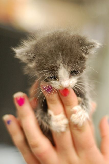 Wittle baby Kitty...