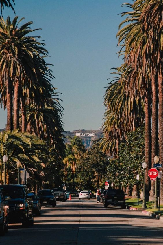 How to Find the Palm Tree Lined Street with a View of the Hollywood Sign - All Things Kate