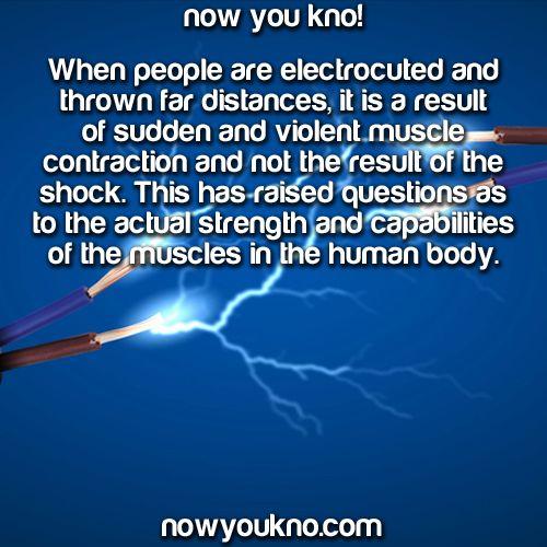 Human Muscle Limit hdm – Human Body Pushing the Limits Strength Worksheet