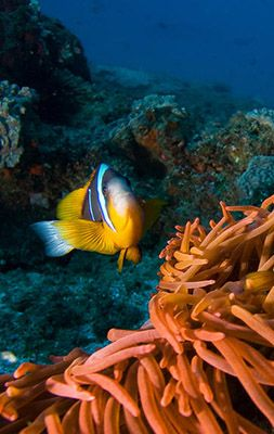 Maldives : Explore the Banana Reef at Night