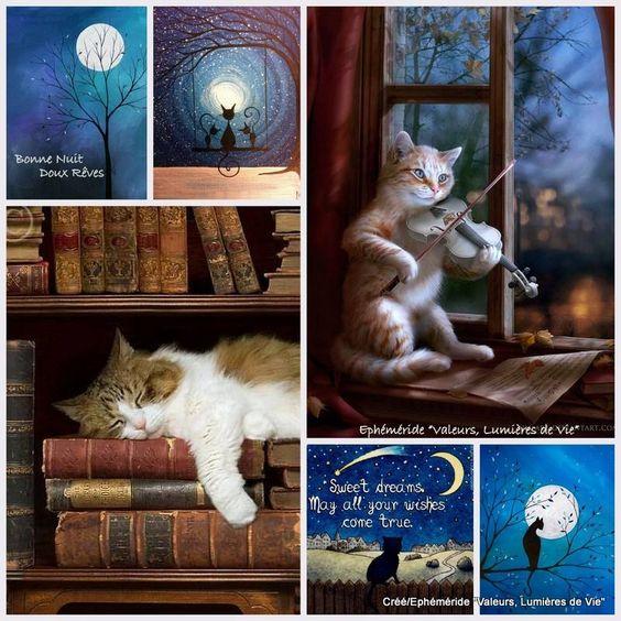 gatti-luna-collage-immagini