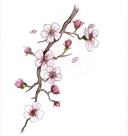 Сакура рисунок карандашом поэтапно