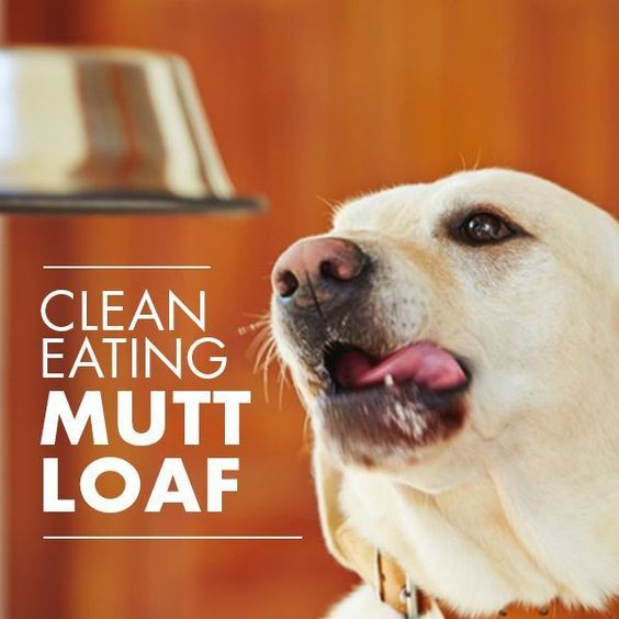 Mini Meat Loaves for Dogs