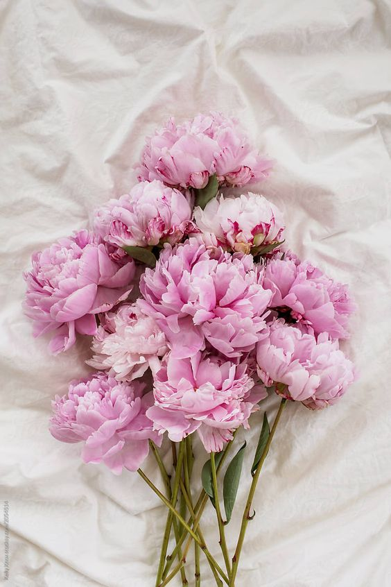 bouquet of pink peonies on a bed by Kelly Knox for Stocksy United