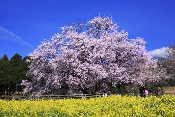 春の一大イベント《お花見特集》早く行きたくなる情報満載でお届け♡