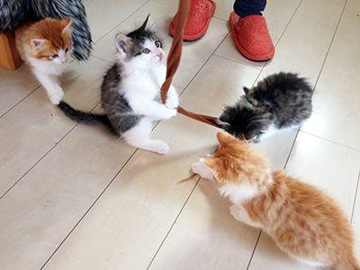 猫カフェ 吉祥寺にあるお店を特集、帰りたくなくなっちゃう!?