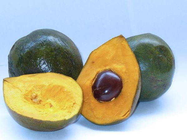 Lucuma, a tropical fruit native to Peru, rich in iron, calcium, fiber, beta-carotene and niacin. Use it as a dried powder as a natural low sugar sweetener. Wound healing, anti-diabetic and anti-hypertensive properties. The seed has antimicrobial, antimitotic (cancer fighting), antibacterial, and immunomodulatory (helps with asthma, allergies, AIDS & AI disorders) effects.
