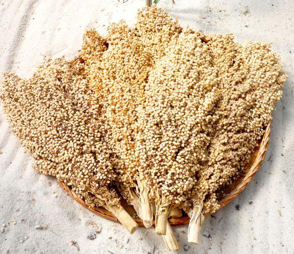 sorghum grain | GRAIN, SORGUM, BICOLOR