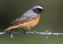 Dorset: Bird Walk at
