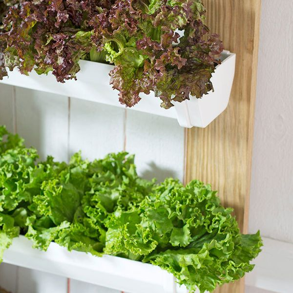 Tips on Growing Vegetables in a Rain Gutter Garden:  Where to put them, the best vegetable and herb plants to grow in them, advantages of growing in gutters