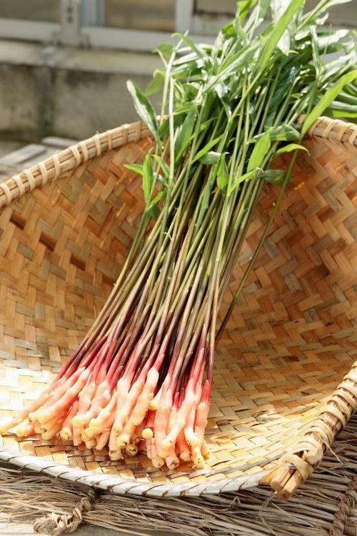 矢生姜L(30本入) 金時生姜だけを半世紀に渡り栽培する『しょうが屋木村』|商品詳細