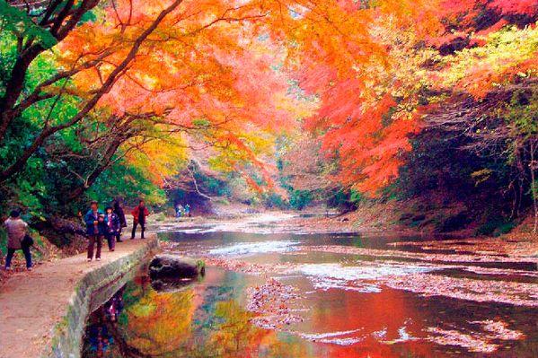 紅葉シーズン特集!養老渓谷の紅葉の見頃やお得な情報のまとめ
