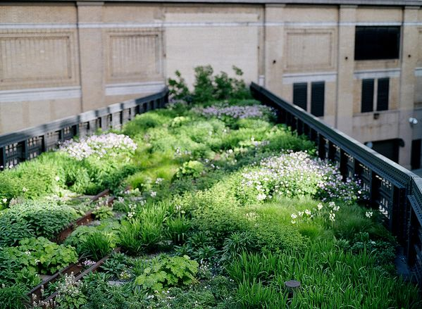 Meadow on the roofto