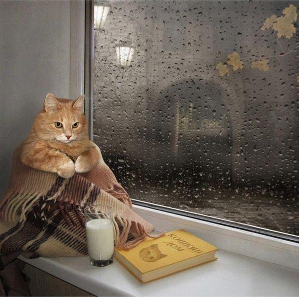 Картинки девушка дождь осень