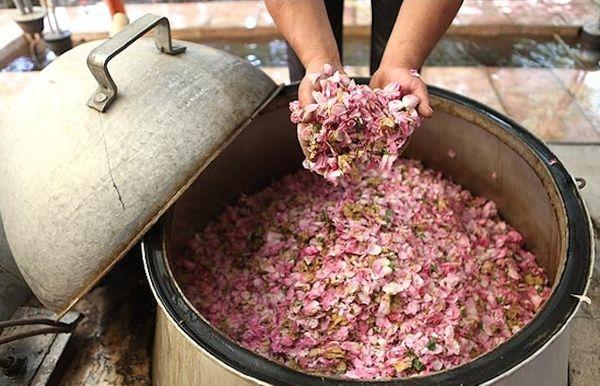 Liqueur of rose, rose,liquor,thracian, roses, rose oil,Bulgaria rose,treasure | Liqueur of rose