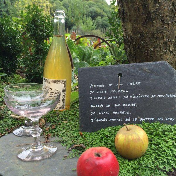 知って得する『シードル』基本情報を大公開、リンゴの風味が爽やか♪