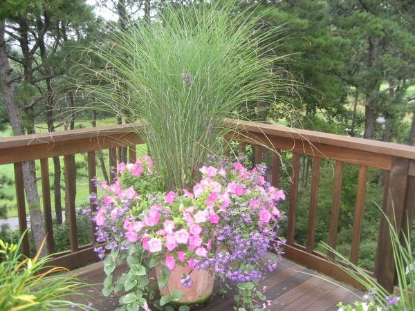 Plantas para jardines secos decoraci n de jardines for Decoracion jardin seco