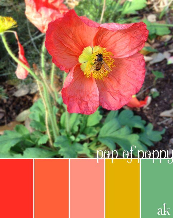 a poppy-inspired col