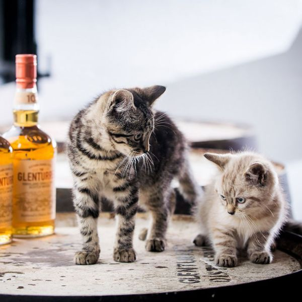 Furry Mousers Make Purrfect Addition to Scottish Distillery