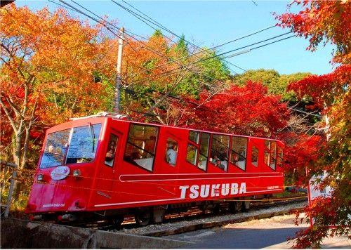 紅葉の名所「筑波山」は秋が一番最高潮!乗り物でラクラク紅葉見物
